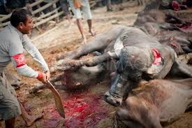 Hindu Council UK joins forces with Compassion in World Farming to stop the Gadhimai' Festival in Nepal